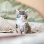 Cat Sitting Sydney